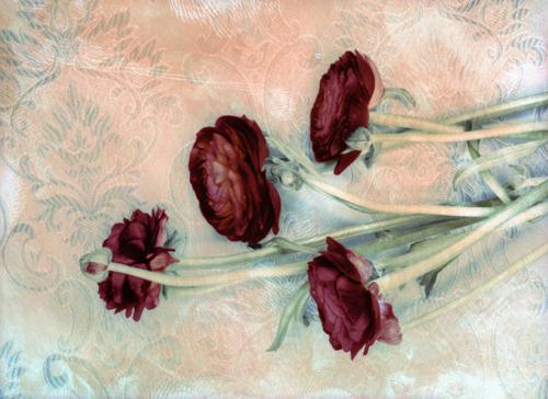 Ranunculus on Pattern 110800